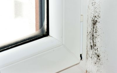 8 Habits That Cause Mold in Your Home